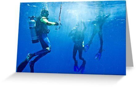 Diver jump / Emma M Birdsey by Emma M Birdsey