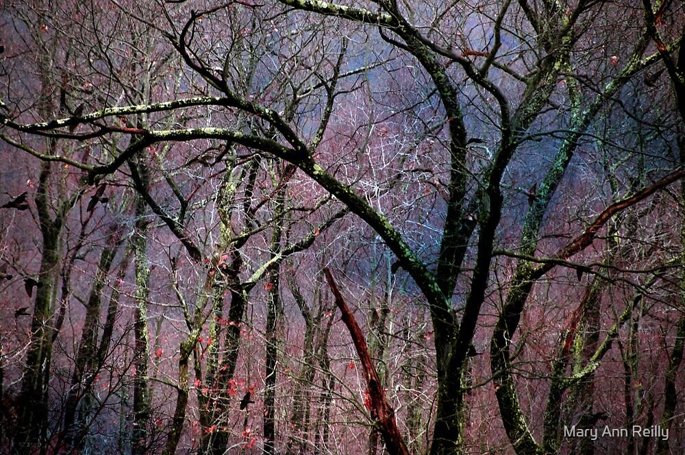 Rain and Light by Mary Ann Reilly