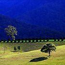 valley blues by carol brandt