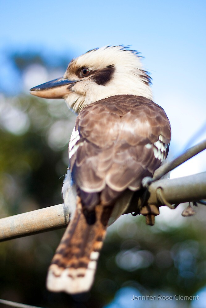 Kookaburra on the Washing Line by Jennifer Rose Clement
