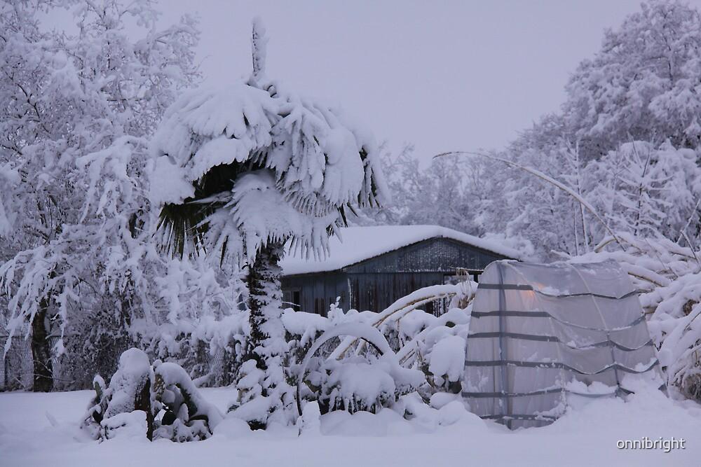 Winterwonder by onnibright