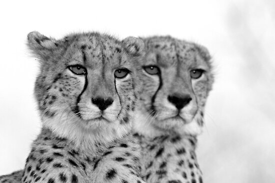 Seeing Double? by Michael  Moss