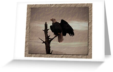 One Tree, One Eagle by Gail Bridger