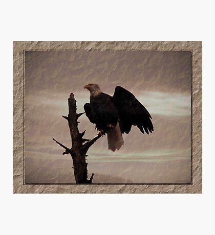 One Tree, One Eagle Photographic Print