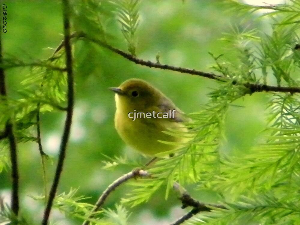 Yellow Warbler - Cypress Lake by cjmetcalf
