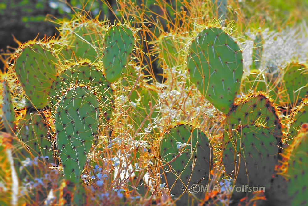 Prickly Pear Cacti by Monica Wolfson