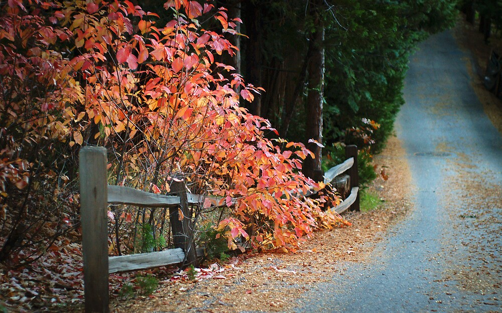 Autumn Walk in Lake Arrowhead by brian watkins