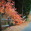 Autumn Walk in Lake Arrowhead by brian watkins