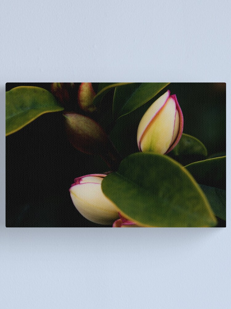 Alternate view of Michelia figo Canvas Print