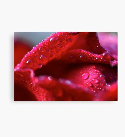 kissing petals Canvas Print