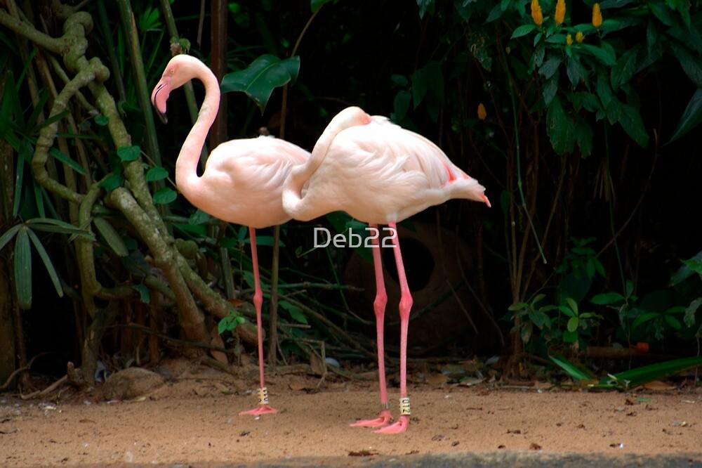Andean Flamingoes by Deb22
