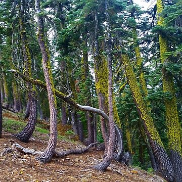 The Sierra Buttes Fire Lookout Trail - Moss Heaven by BWoods37