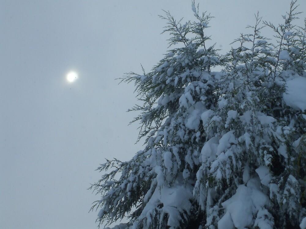 Fog and Snow by Gazhutch32