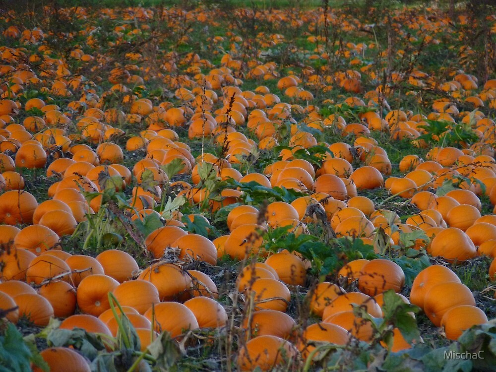 The Great Pumpkin will be here soon! by MischaC