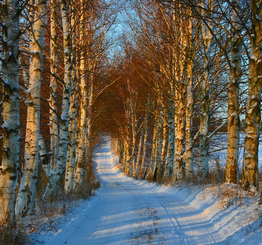 Winter path at sunset by Trine