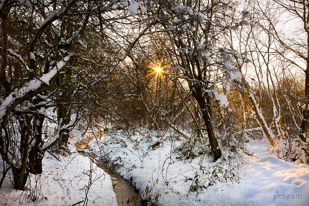 Worsbrough Woods by picturistic