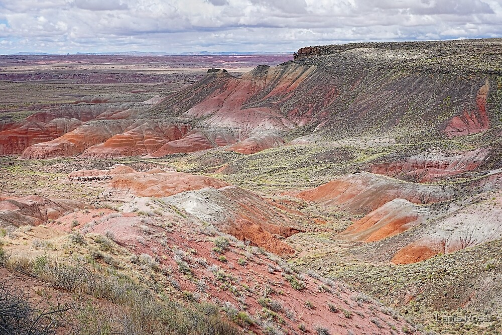 The Painted Desert  by Lanis Rossi