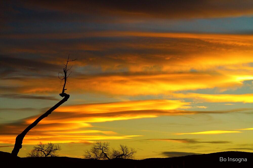 November Sunset by Bo Insogna