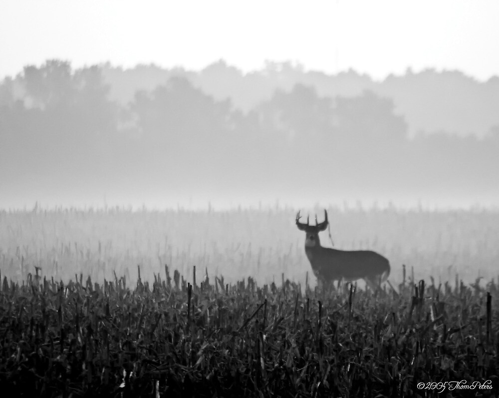 White Tail Buck by PixelPerfectPho