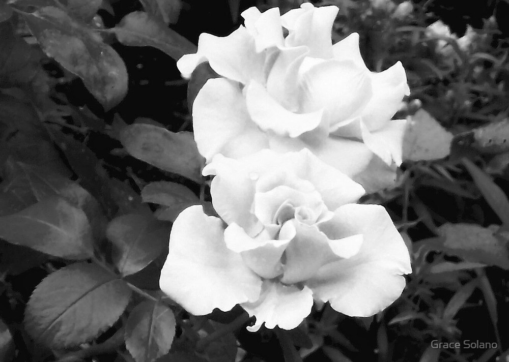 Frozen Rose by Graciela Maria Solano