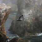 Foggy Morning Flight by CarolM