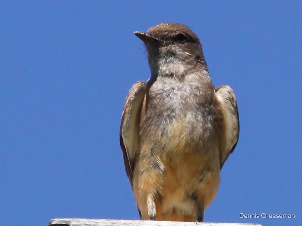 Western Kingbird by Dennis Cheeseman