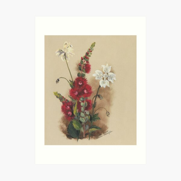 Western Australia wild flower Scarlet Feather Flower and Southern Cross - Verticordia grandis and Xanthosia rotundifolia State Library of Western Australia Art Print