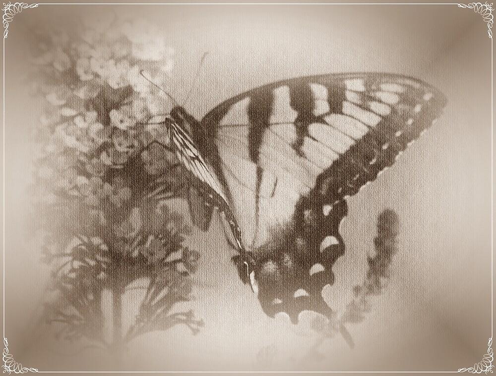 Butterfly Dreamin by rasnidreamer