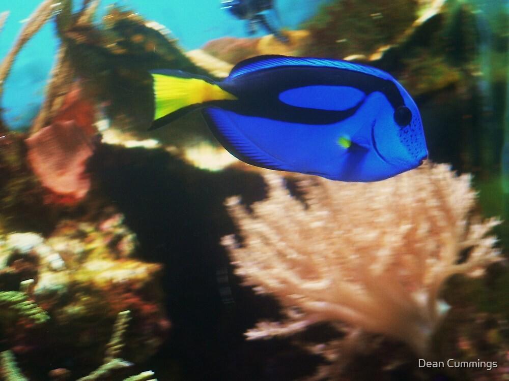 Coral. by Dean Cummings
