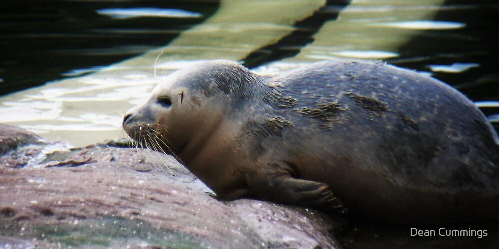 Seal by Dean Cummings