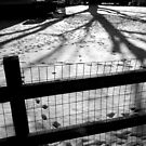 Fence and shadows by MistyAdkins