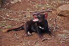 Tasmanian Devil (1) by Kayleigh Walmsley