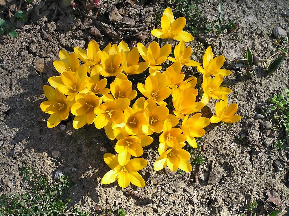 Joyful Awakening of Spring by didi24