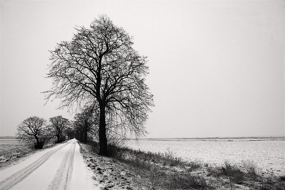 thorney dyke in winter by SteveOnTheRun