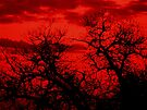 Blood Red Sky by Kayleigh Walmsley