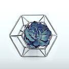 Succulent in Hexagon by Sybille Sterk