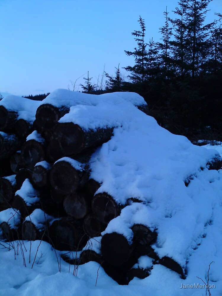 Snowy logs by JaneMerson