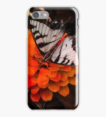 Eastern Tiger Swallowtail Butterfly (Family Papilionidae) iPhone Case/Skin