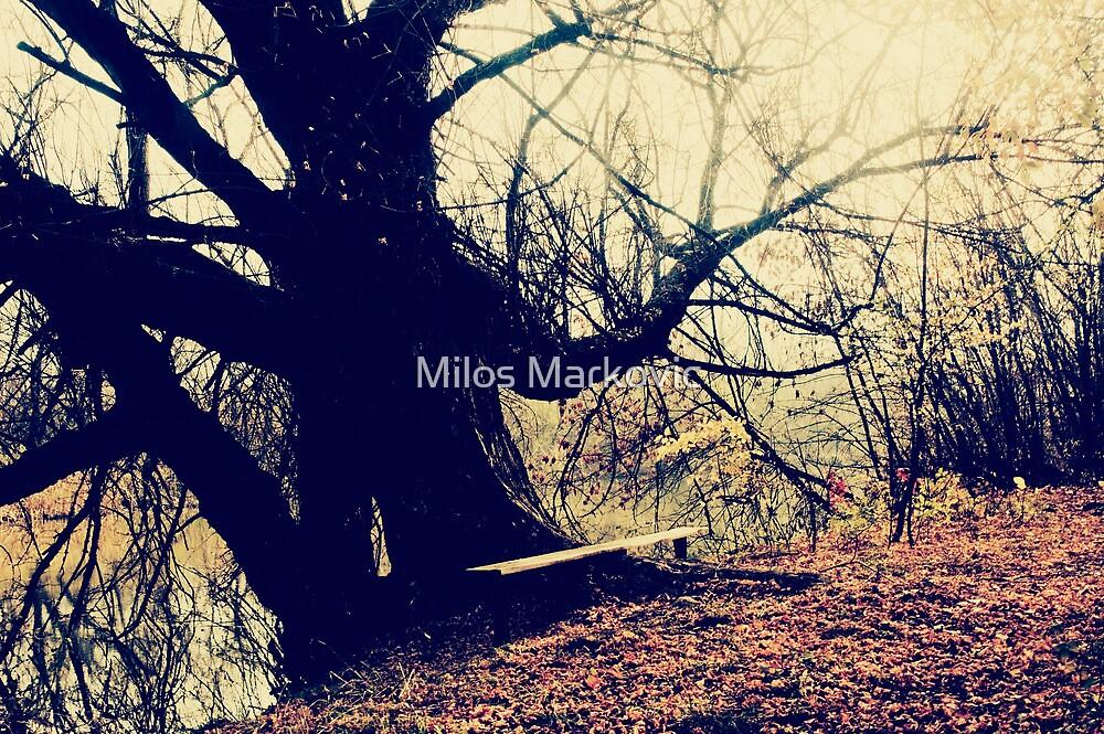 Bench by Milos Markovic