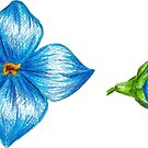 blue bells by lisenok