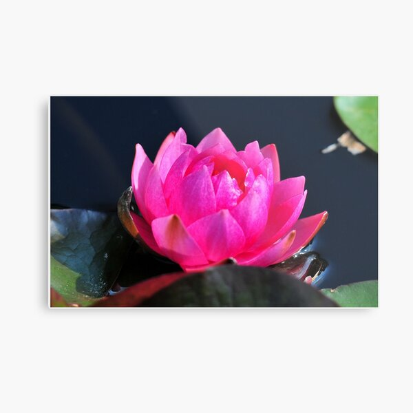 A Flower with Open Heart Metal Print