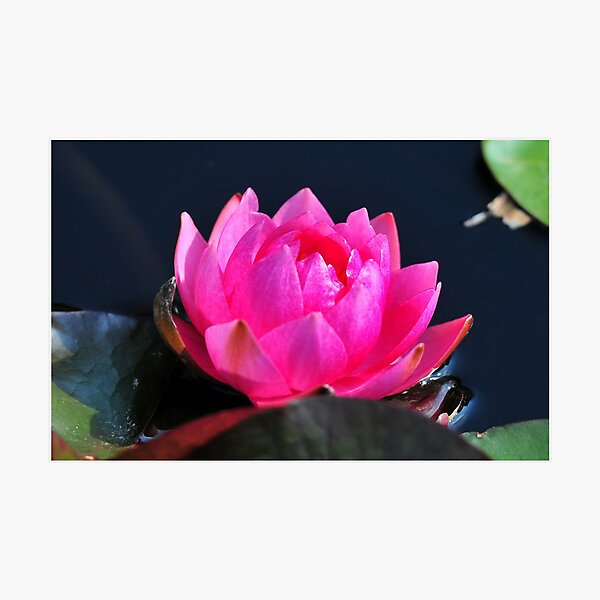 A Flower with Open Heart Photographic Print