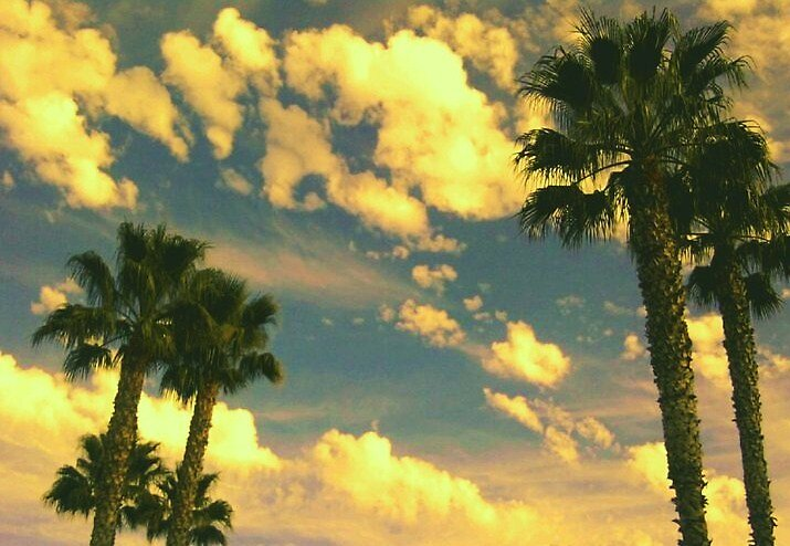 Palms at Play by Lindsey Fisher