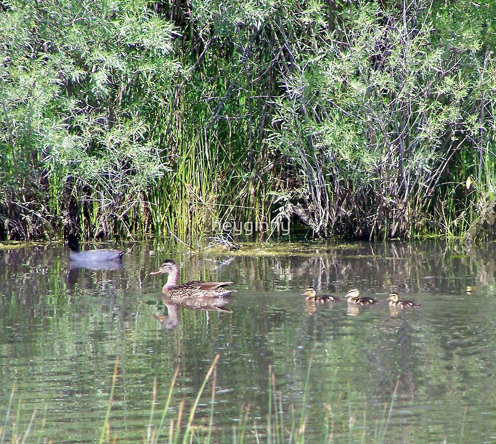 Family of Ducks by heyginny
