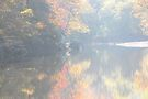 Filtering The Autumn Colors by NatureGreeting Cards ©ccwri