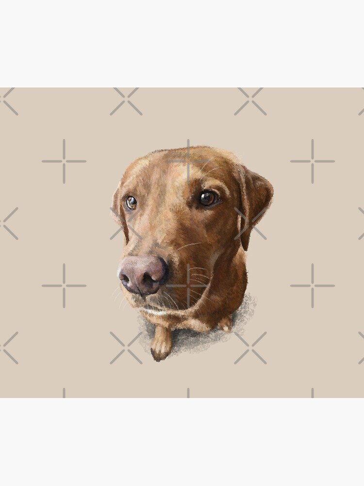Finn the Labrador by elspethrose