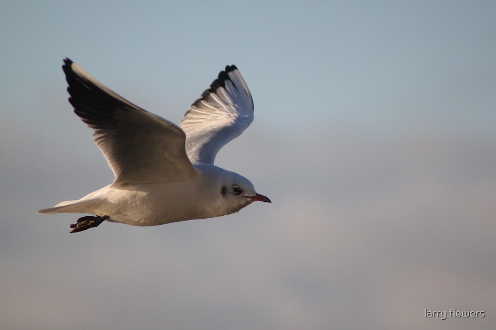 On the wing  by larry flewers