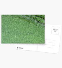 Crocovert Postcards