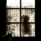 Window Pain by brian watkins