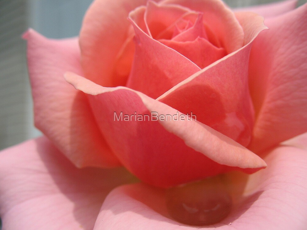 "Soulful ""Marvin Gaye"" Rose  by MarianBendeth"